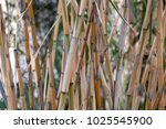 stalks of reeds. bamboo stalks.