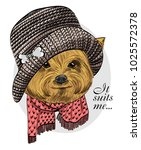 vector dog with knitted hat and ... | Shutterstock .eps vector #1025572378