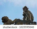 two little monkeys perched on a ... | Shutterstock . vector #1025595040