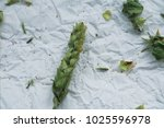 close up green sage branch on... | Shutterstock . vector #1025596978