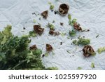 close up bunch of green sage... | Shutterstock . vector #1025597920