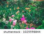 plenty of various species of... | Shutterstock . vector #1025598844