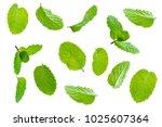 fly fresh raw mint leaves... | Shutterstock . vector #1025607364