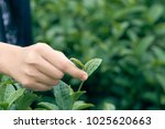 asian woman hand picking up the ... | Shutterstock . vector #1025620663