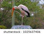 a large yellow billed stork ... | Shutterstock . vector #1025637406
