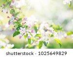 blooming cherry blossom.... | Shutterstock . vector #1025649829