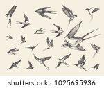 Stock vector a flock of birds flying swallows hand drawn vector illustration sketch 1025695936