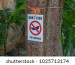 do not feed iguanas sign in...   Shutterstock . vector #1025713174