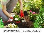 Gardener Woman Planting Flowers ...