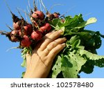 farmer hands with bunch of... | Shutterstock . vector #102578480
