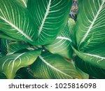 green leaves background | Shutterstock . vector #1025816098