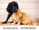 Stock photo dog licks a cat love friendship big and small 1025816836