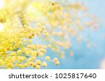 flower spring background  8... | Shutterstock . vector #1025817640