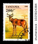 Small photo of MOSCOW, RUSSIA - NOVEMBER 25, 2017: A stamp printed in Tanzania shows Hartebeest (Alcelaphus buselaphus), Hoofed Animals serie, circa 1995