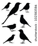 Birds Silhouette   7 Different...