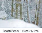 lynx hidden in snow forest....   Shutterstock . vector #1025847898