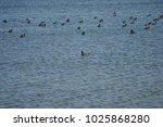 birds on the lake | Shutterstock . vector #1025868280