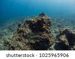 Underwater Seascape With...