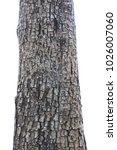 Tree Trunk Isolated On White...