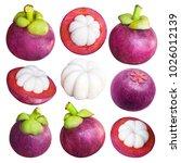 delicious tropical mangosteen... | Shutterstock . vector #1026012139