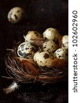 Quail eggs and feathers in a nest. - stock photo