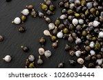 job's tears   coix lachryma... | Shutterstock . vector #1026034444