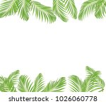 green palm leaves on white... | Shutterstock . vector #1026060778
