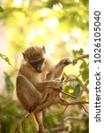 Small photo of cute young gambian monkey on a tree branch with green leaves in the background on a sunny day in Africa