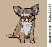 little chihuahua dog. puppy the ... | Shutterstock .eps vector #1026153034