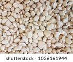 close up. mocha dhall bean | Shutterstock . vector #1026161944