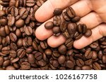 selection of roasted coffee... | Shutterstock . vector #1026167758