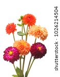 flower of beautiful orange and... | Shutterstock . vector #1026214504