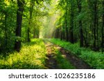 spring forest. a misty morning... | Shutterstock . vector #1026235186
