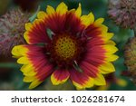 yellow and red flora | Shutterstock . vector #1026281674
