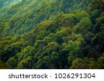 rainforest africa  rainforest ... | Shutterstock . vector #1026291304