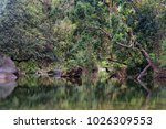 at the babinda boulders ... | Shutterstock . vector #1026309553