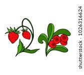 set of berries vector...   Shutterstock .eps vector #1026316624