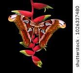 atlas moth   attacus atlas...   Shutterstock . vector #1026337480