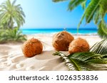 coconuts on the beach with a... | Shutterstock . vector #1026353836