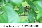 Hummingbird S Hidden Nest