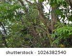 diadem motmot perched in tree | Shutterstock . vector #1026382540