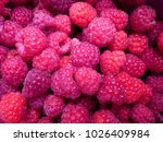 fresh and sweet red raspberries ... | Shutterstock . vector #1026409984
