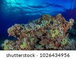 coral barrier reef   Shutterstock . vector #1026434956
