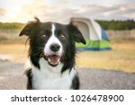 A border collie dog in front of ...