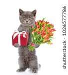 cat with a bouquet of tulips... | Shutterstock . vector #1026577786