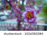 background of plastic pink...   Shutterstock . vector #1026583384