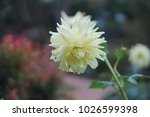 flowers bloom flora  | Shutterstock . vector #1026599398