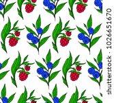 berries vector illustration....   Shutterstock .eps vector #1026651670