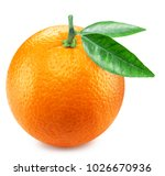 Orange Fruit With Orange Leave...