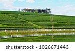 tea plantation in chiang rai ... | Shutterstock . vector #1026671443